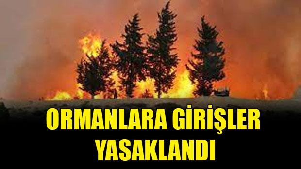 Şırnak'ta ormanlık alanlara girişler ikinci bir duyuruya kadar yasaklandı