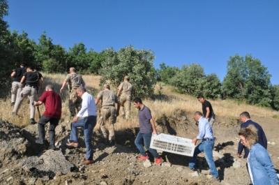 İdil'de 2 bin kınalı keklik doğaya bırakıldı