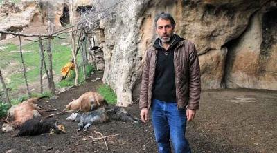 İdil'de kurtlar, sürüye saldırdı; 25 keçi öldü, 15'i yaralı