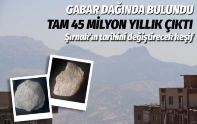 Şırnak Gabar Dağı'nda 45 milyon yıllık deniz canlıları fosilleri