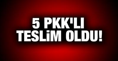 Şırnak'ta 5 PKK'lı  teslim oldu
