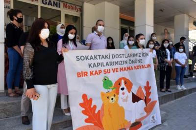 Şırnak'ta AK Parti'li kadınlardan sokak hayvanlarına destek